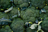 cancer-fighting-broccoli