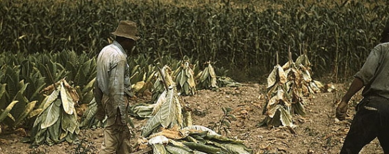 Tobacco as a cash crop and opening up about addiction