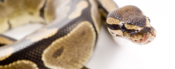 Snake venom and cancer research, Latino cancer rates, and other cancer news